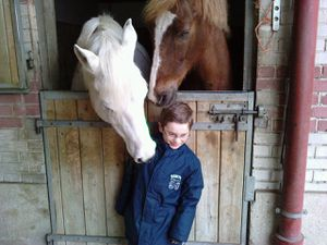 pou chevaux 3