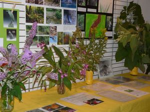 plantes-invasives--expo--3-.JPG