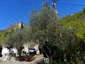 Brison-Les--oliviers--048.jpg