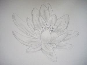 Esquisses dessins études et croquis - fleurs : Le dessin du jour - fleur de lotus dessin au crayon hb F. Claire - Claire Frelon artiste peintre profesionnel en Morbihan - Bretagne - France - galerie de peinture