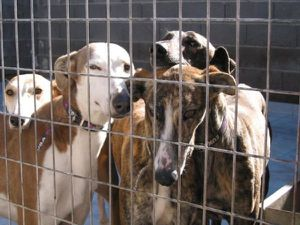 2004-20quartet-20of-20galgos.jpg