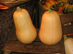 250px-Courges_butternut_01.jpg