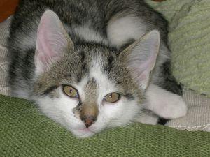 Bilder-Katzenkinder-Feli-324.jpg