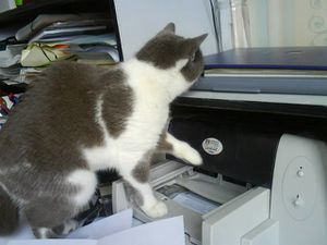 chat technologie