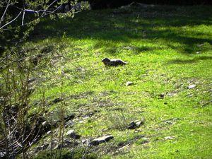 Marmotte Borderan 040