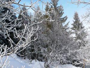 Les arbres habillés de givre 006