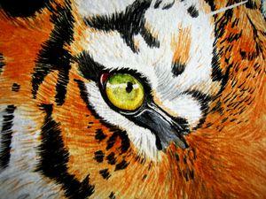 oeil-tigre.JPG