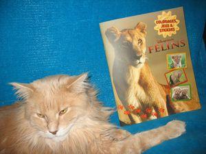 bibi felins disney nature (2)