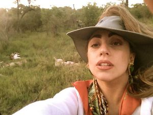 lady gaga en safari