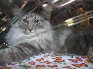 salon du chat tours 2011 (95)