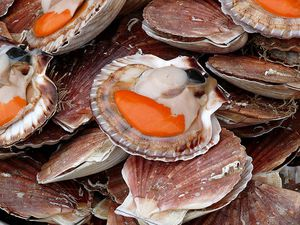 coquille-st-jacques.jpg