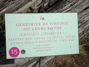 Versailles-5951.JPG