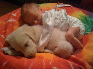 bebe et chien