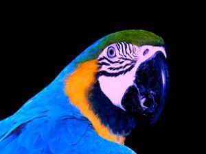 perroquet2.jpg