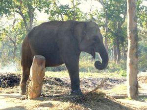 elephant-enchaine-_photos2_17_169_1689_168853_full.jpg