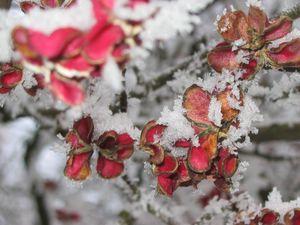 fleurs-neige.jpg