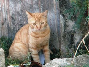 chatte rousse 19