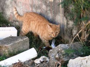 chatte rousse 21