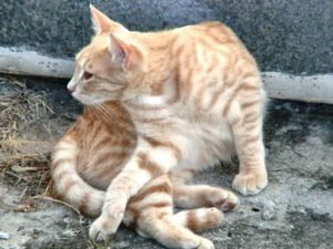 chatte rousse souplesse 01