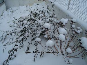 jardin-neige-janv2012-03.jpg