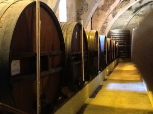 Banyuls-Collioure 1083