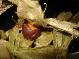 physalis--copie-1.jpg