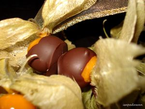 physalis-copie-1.jpg