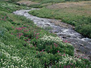 Creek-copie-1.jpg