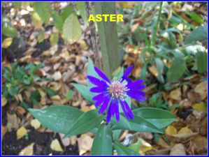 ASTERS (6)