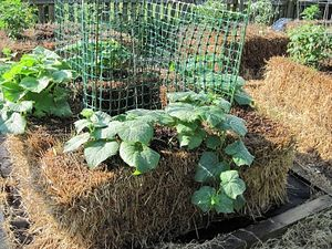 NATURES - Culture sur paille StrawBaleGarden (11)