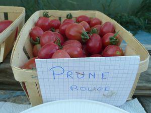 dégustation tomates juillet 2011 011