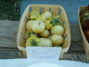degustation-tomates-juillet-2011-014.jpg