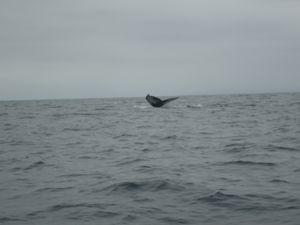 Puerto Suuarez - Baleines (12)