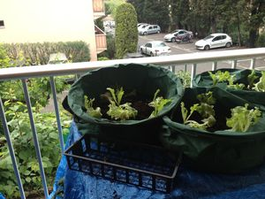 potager-sur-balcon-0410---Copie.JPG