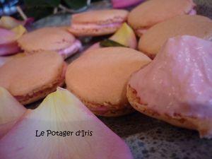 Macaronsrose2