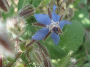 polen 15 (Small)