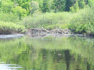 05. Kayak rivière (10)