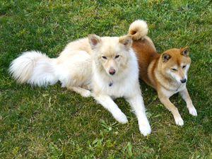 chiens-rares-blog.jpg