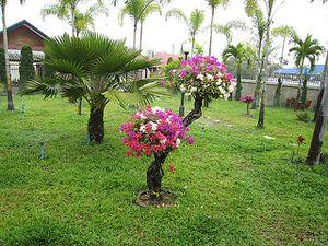 alain-toffee-thai-bangkaew9.jpg