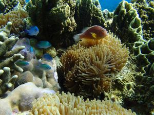 2013 07 28 Madagascar diving 043 (Large)