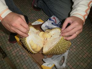 Durian-15