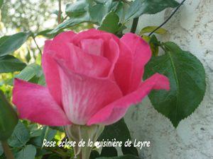 roseéclose