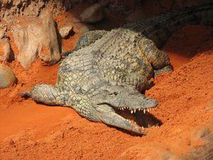 2010.04.21 Les crocodiles11
