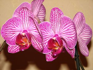 2011.01.11 Orchidée Claude7