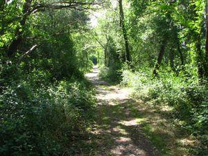 2010.06.10 Sentier le long de la Drôme1