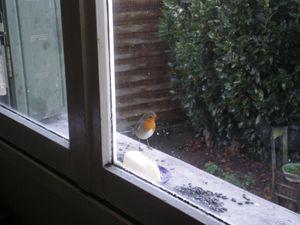 oiseaux 001
