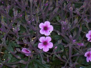 Batz 06 jardin