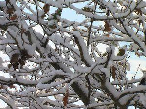 neige-4.JPG