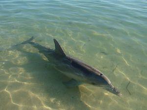 2010_07_15_shark_bay