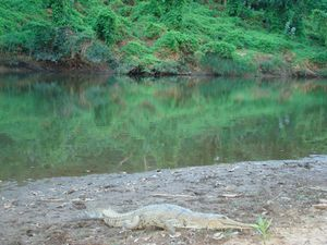 2010_07_29_gibb_river_road